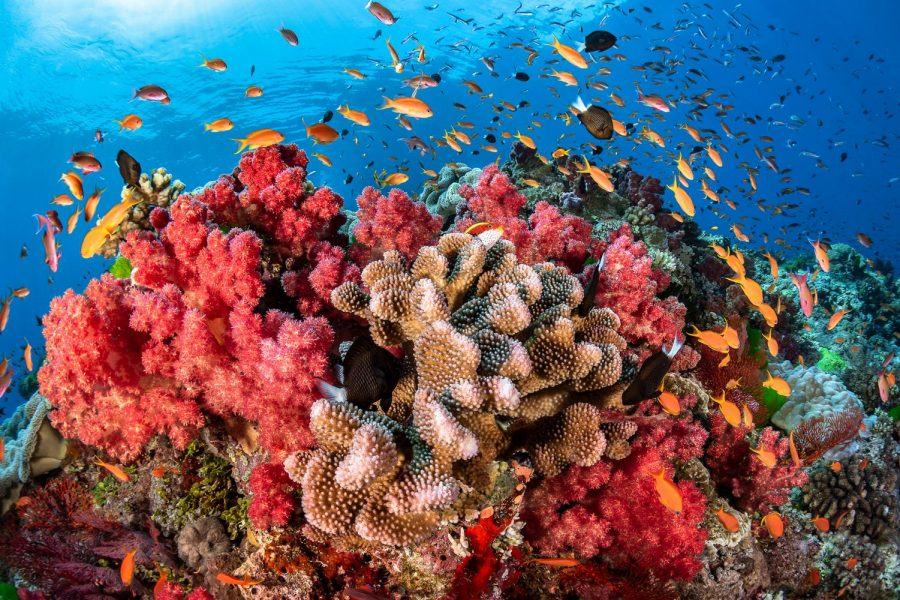 The Coral Reefs - What's Happening and What are Scientists Doing About it?
