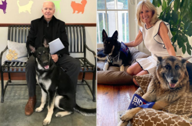 The Return of Dogs to the White House